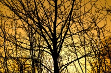 sunset-and-tree
